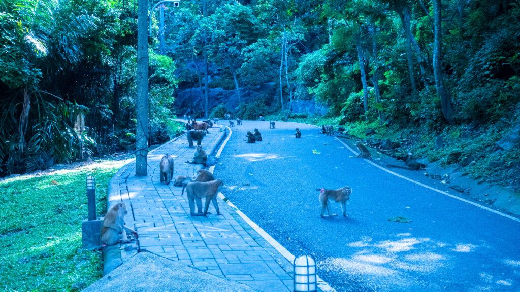 Colline des singes Phuket