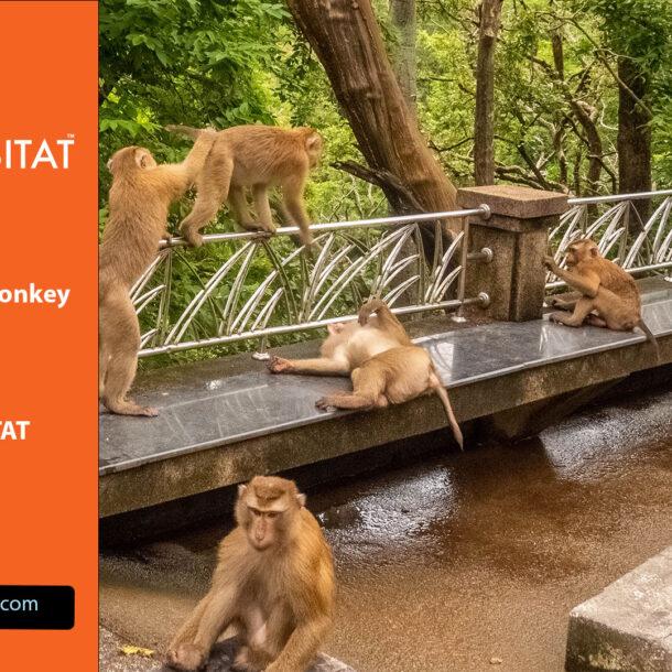 Wo findet man Affen in Phuket