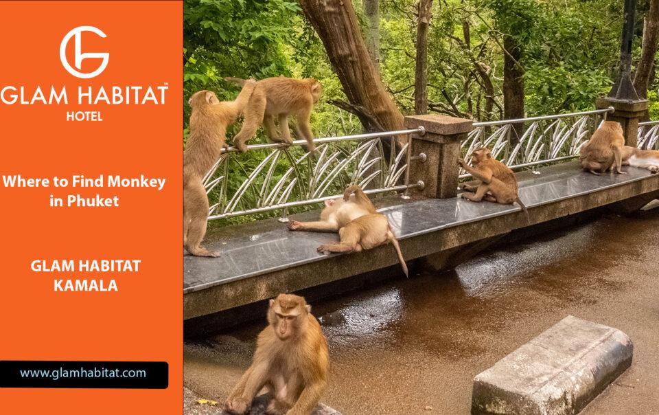 Où trouver des singes à Phuket
